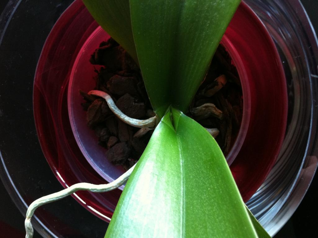 When will you see sign of recovery after repot?-image-jpg