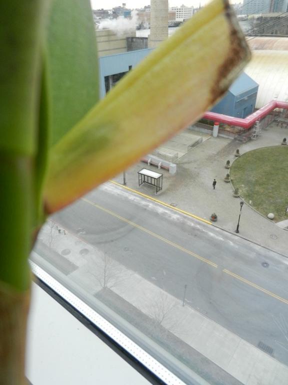 Buds Growing inside sheath finally!!!-dscn4886-jpg