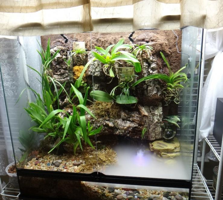Exo Terra terrarium growing-556525_3749896524572_79576137_n-jpg