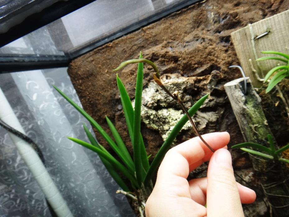 Exo Terra terrarium growing-spike-jpg
