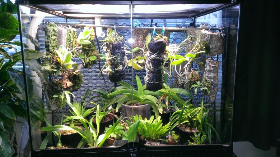 My First Vivarium loaded-wp_20130310_001-jpg