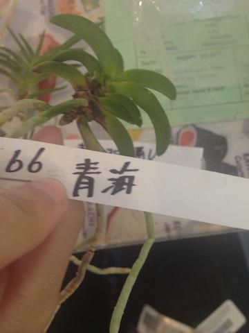 Garage sale score.  Need help with translations.-seikai-jpg