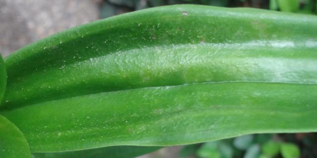 wrinkled leaves-dsc01428-jpg