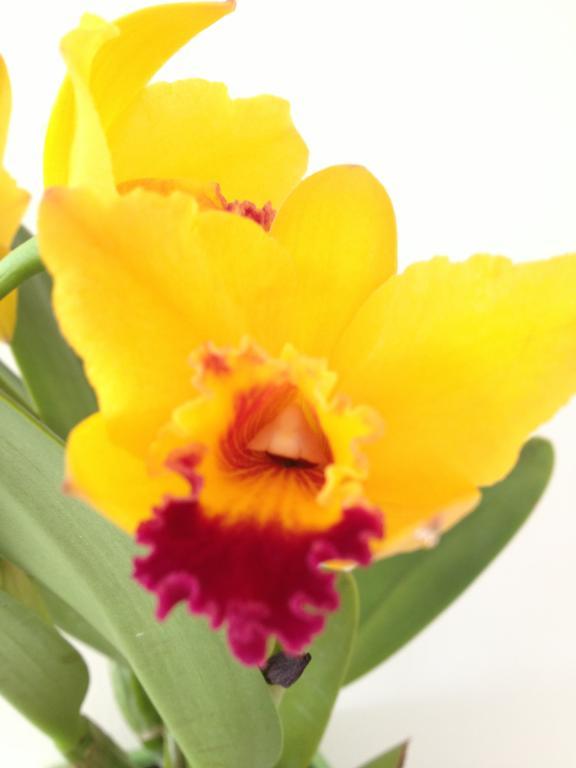Pot. Kat E-Sun 'Lake View' in bloom-004-jpg