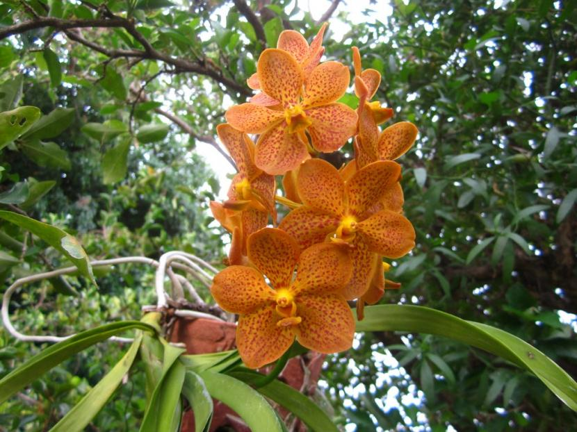 Ascda Crownfox Delicious Marmalade-img_0120-copy-jpg
