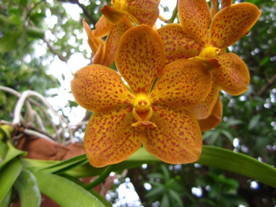 Ascda Crownfox Delicious Marmalade-img_0121-copy-jpg