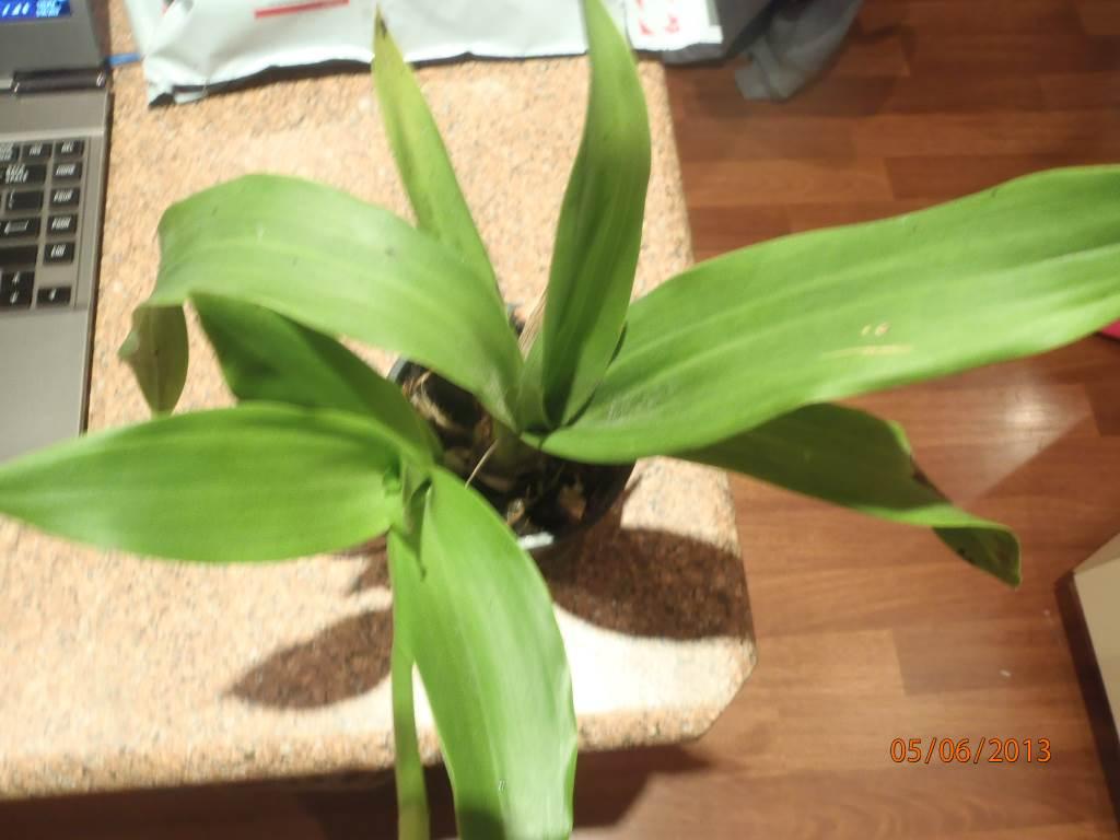 Help me identify this one ***please***-p6050049-jpg
