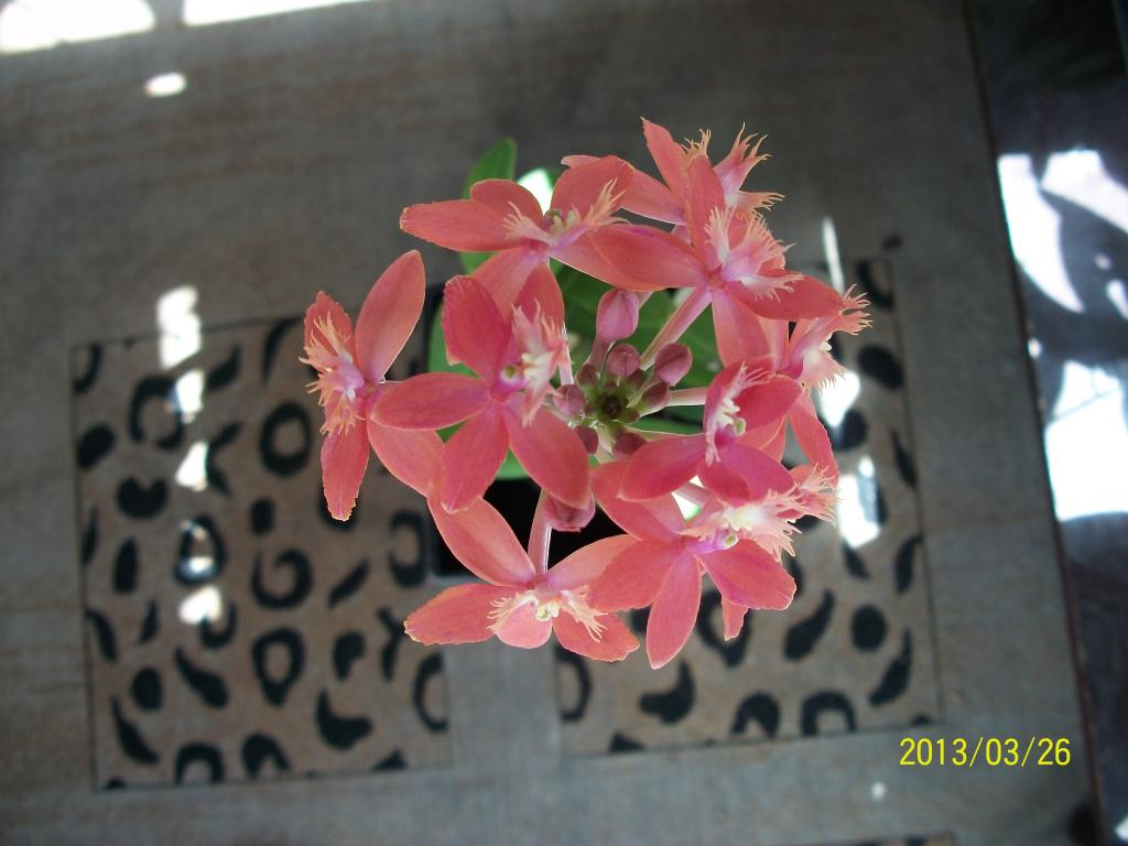 What I've got in bloom for me-006-jpg