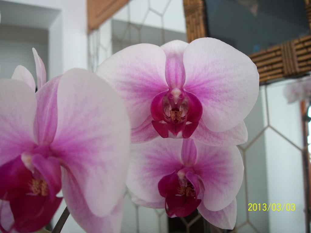What I've got in bloom for me-008-jpg