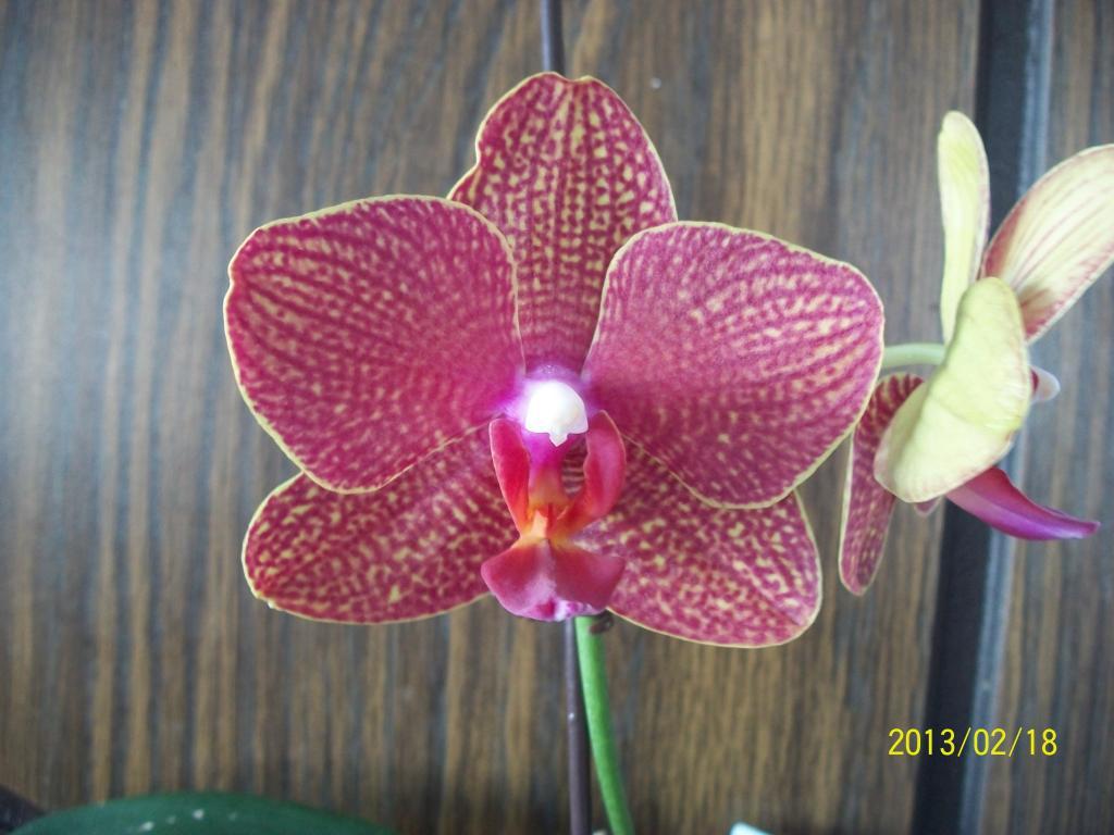 What I've got in bloom for me-014-jpg