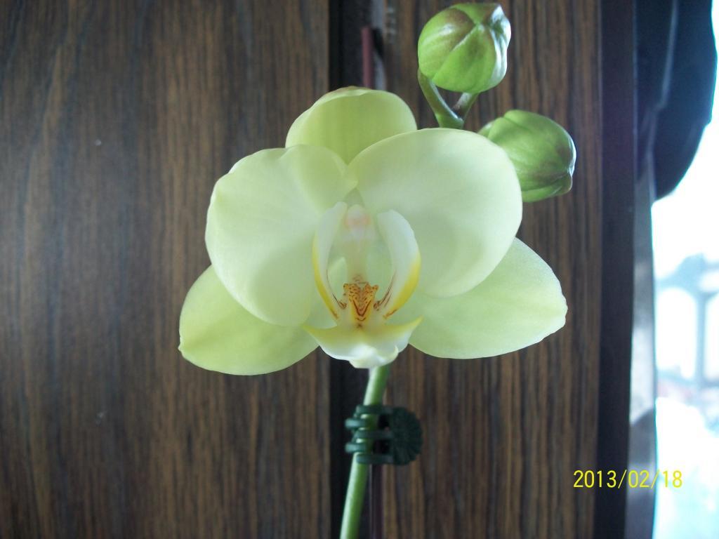 What I've got in bloom for me-016-jpg