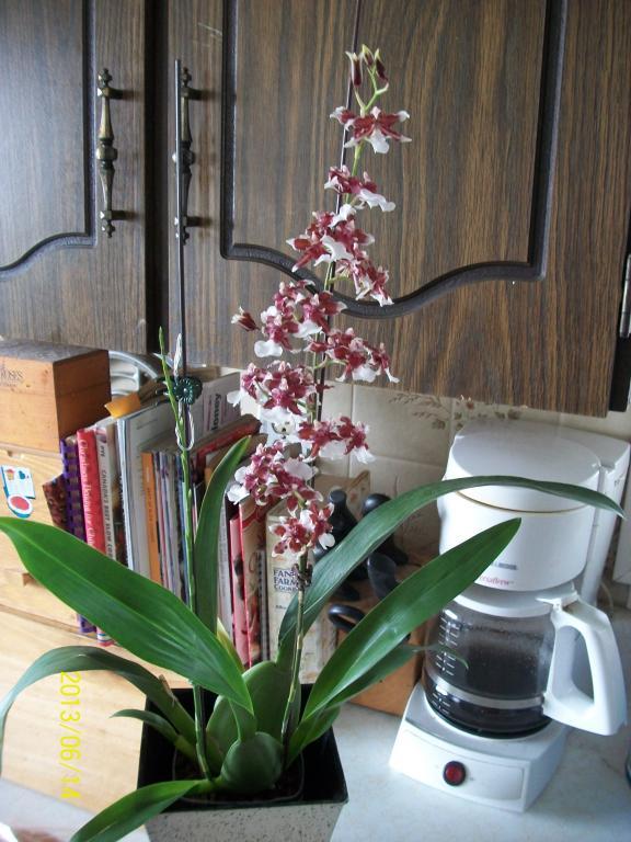 What I've got in bloom for me-012-jpg