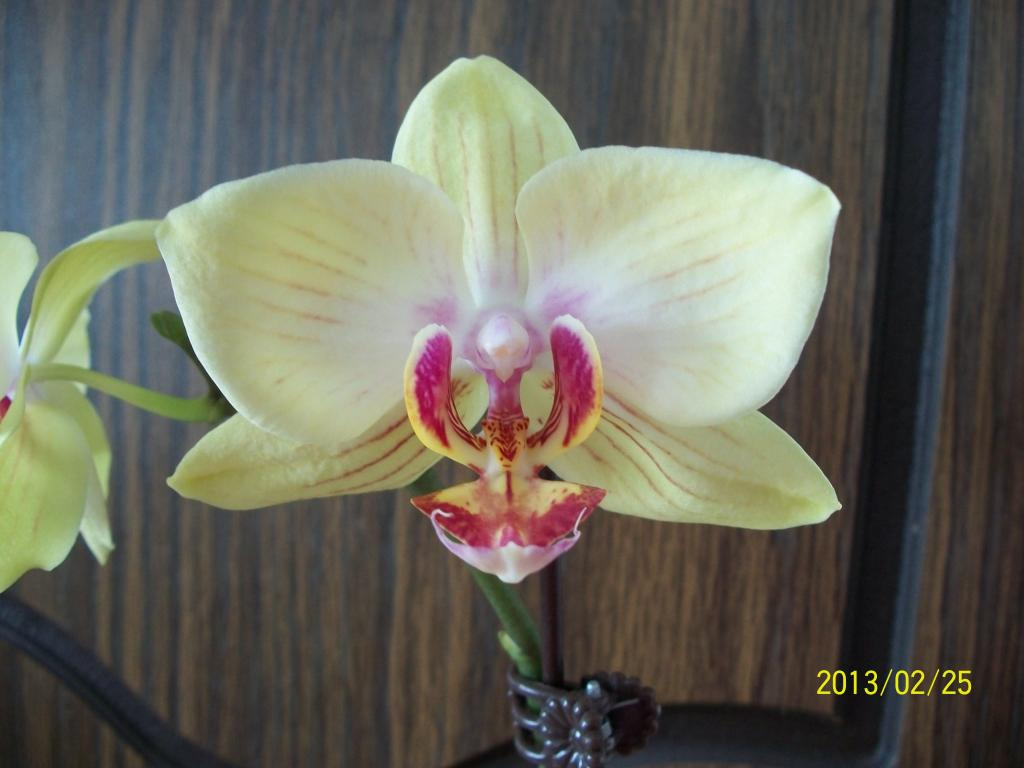 What I've got in bloom for me-049-jpg