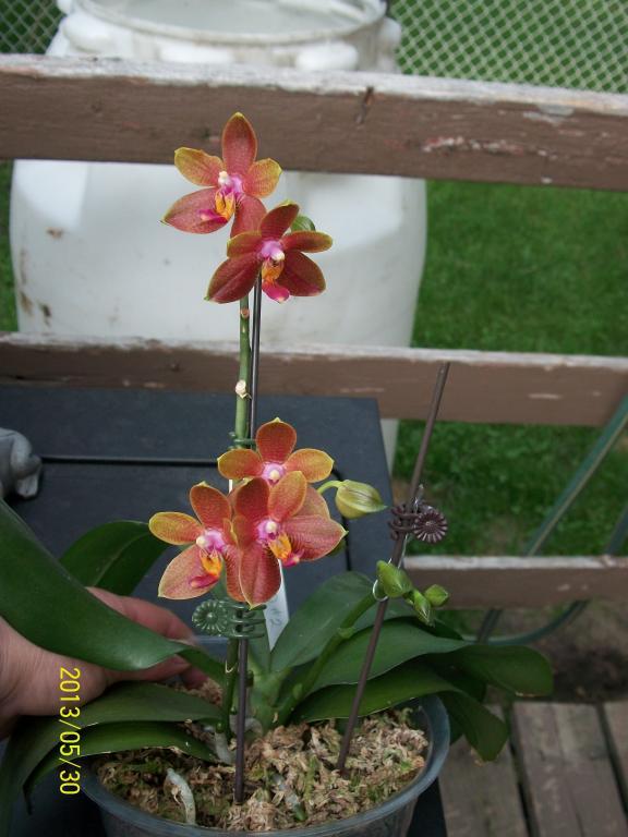 What I've got in bloom for me-048-jpg