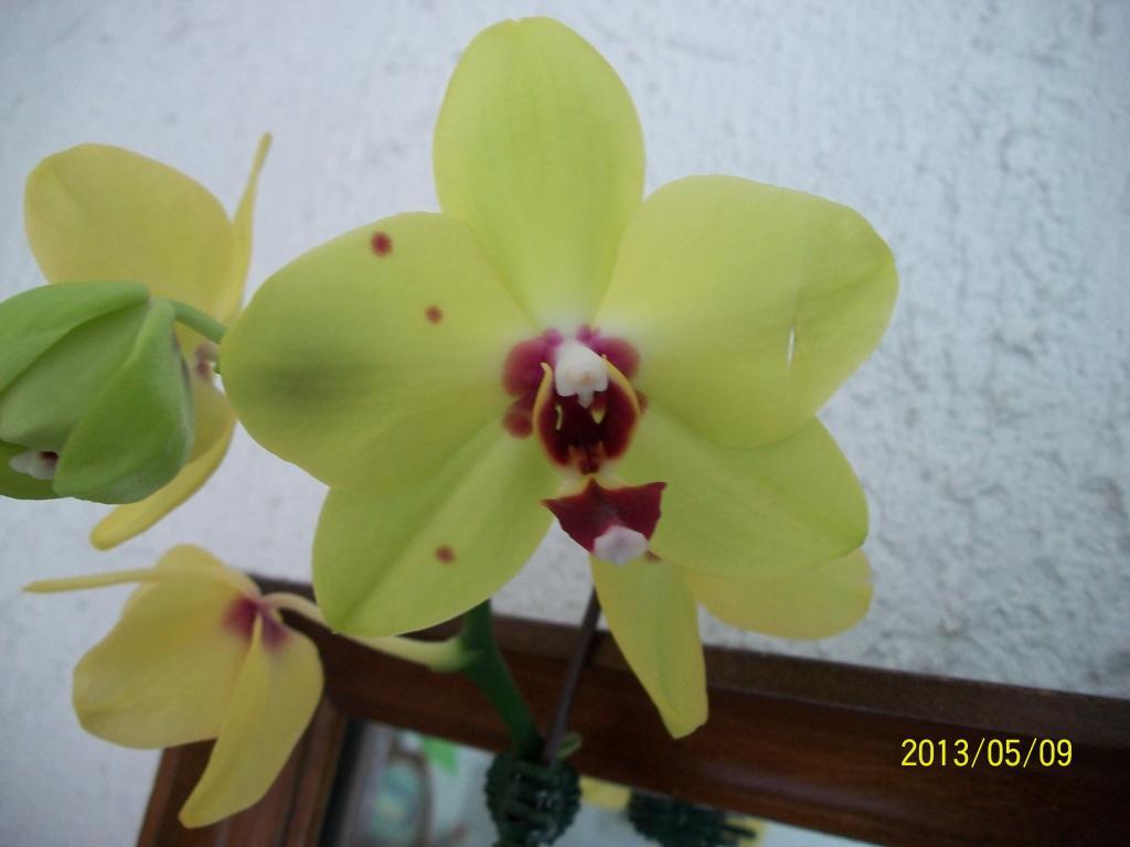 What I've got in bloom for me-007-jpg