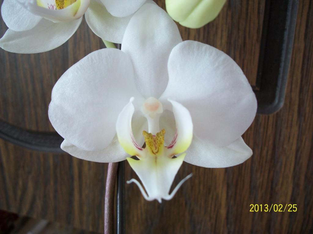 What I've got in bloom for me-047-jpg