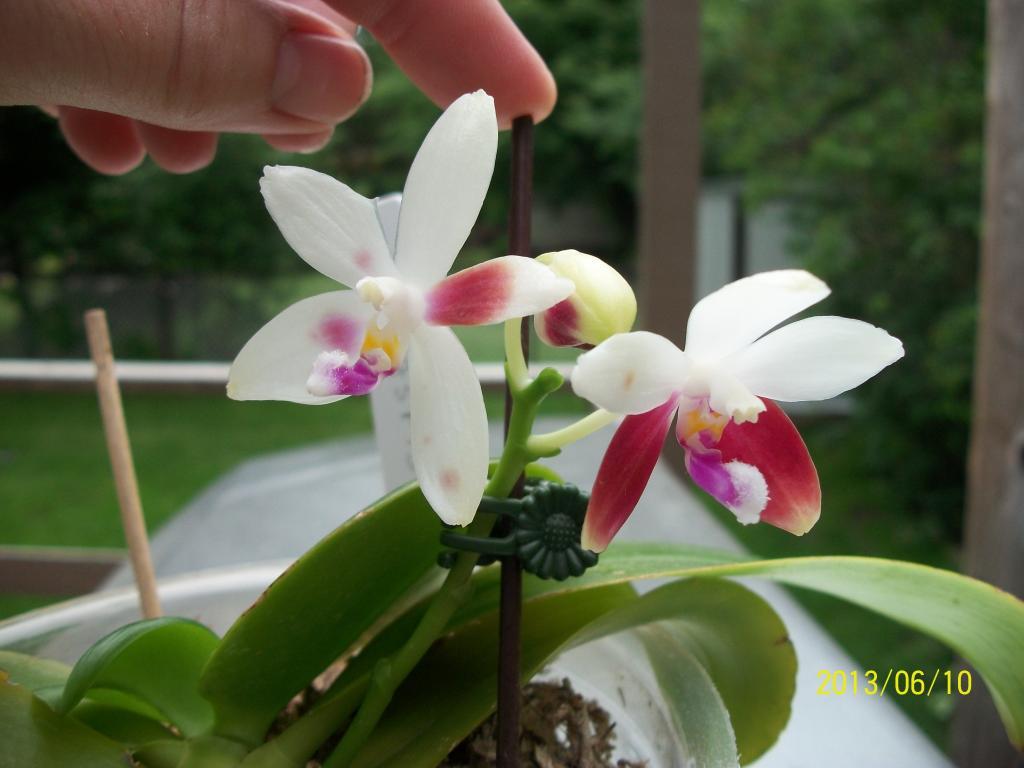 What I've got in bloom for me-011-jpg