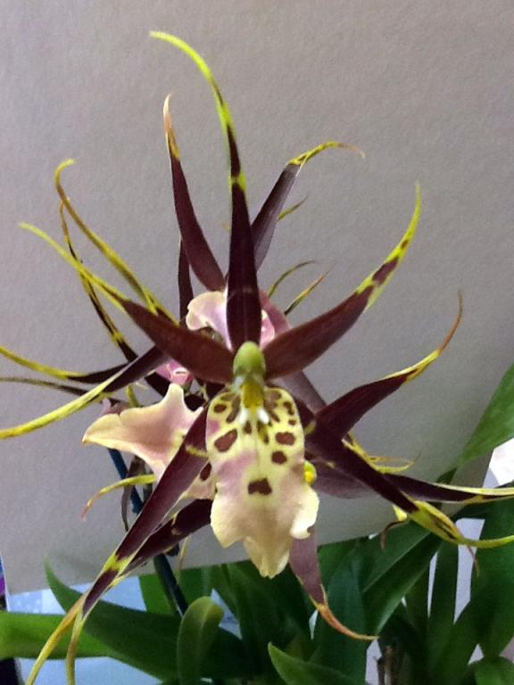What orchid is this and how to take care of it?-photo-jpg