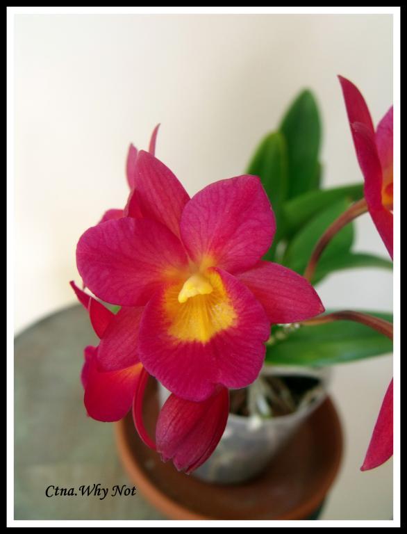 Ctna.Why Not in Bloom-ctna-2-jpg
