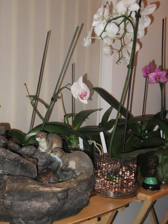 Orchid Humidifier-dscf1550-jpg