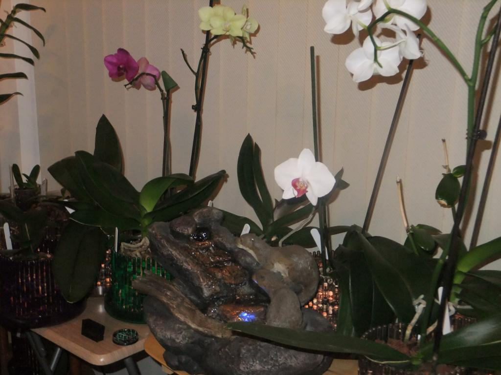 Orchid Humidifier-dscf1555-jpg