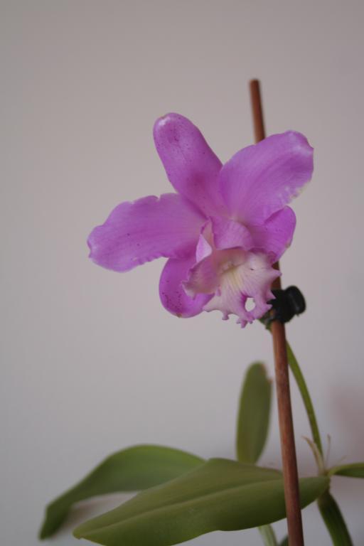 Lc. Fonte da Saudade - first bloom-img_8581-jpg