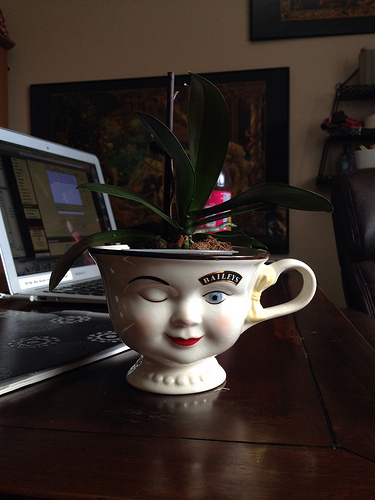 Mini Phal plastic pot- where to buy that size?-9593598088_75a4189f07-jpg