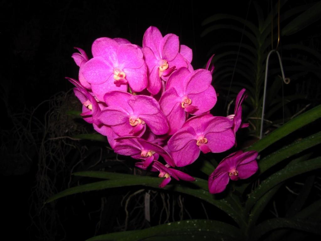 Ascda. Ashley Lowe - Pink-img_0410-copy-jpg