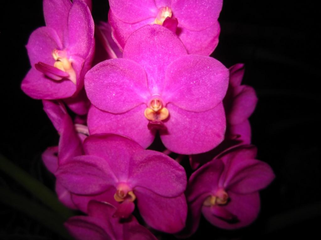 Ascda. Ashley Lowe - Pink-img_0414-copy-jpg