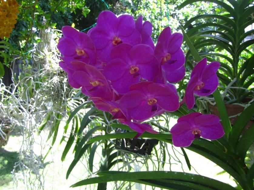 Ascda. Ashley Lowe - Pink-img_0428-copy-jpg