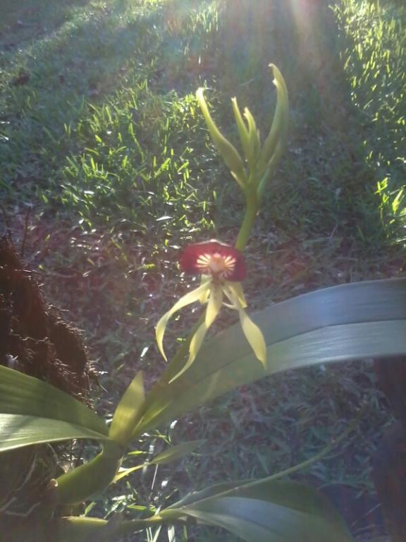 Rio Dulce Morning Coffee Stroll-tmp_black-orchid-2013-12-21-16-57-47491649220-jpg