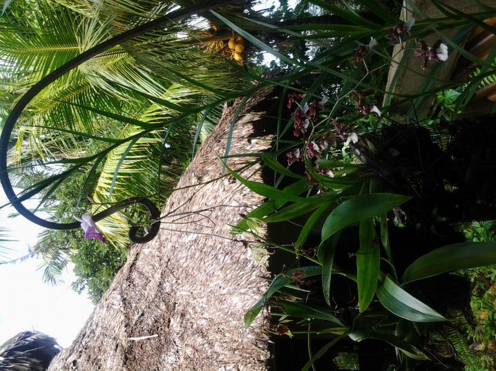 Rio Dulce Morning Coffee Stroll-tmp_20131224_113840-1483827485-jpg