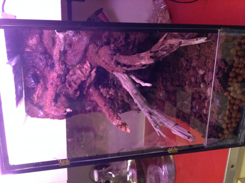 Vivarium for cool growing orchids..in progress.. Literally cool...(build)-photo-1-4-jpg