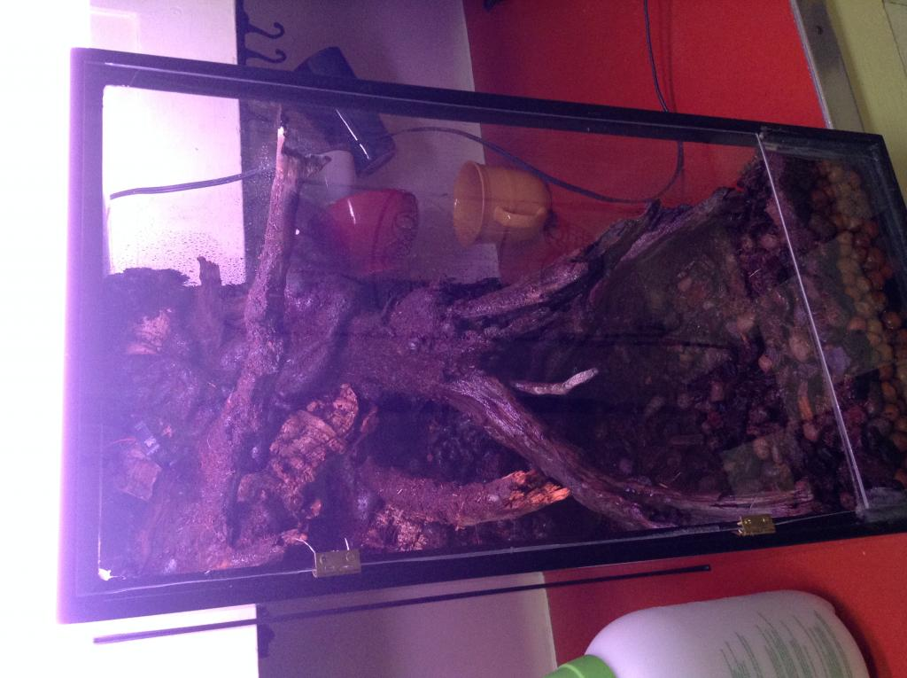 Vivarium for cool growing orchids..in progress.. Literally cool...(build)-photo-4-3-jpg