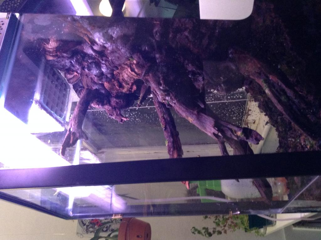 Vivarium for cool growing orchids..in progress.. Literally cool...(build)-photo-5-jpg