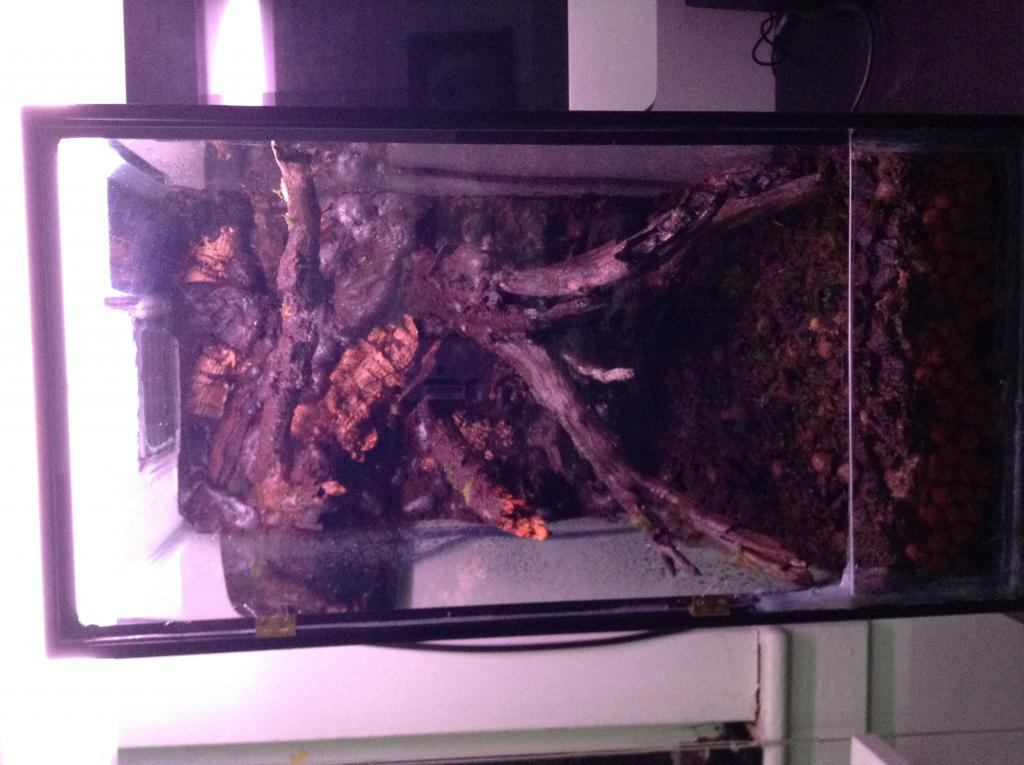 Vivarium for cool growing orchids..in progress.. Literally cool...(build)-photo-4-jpg