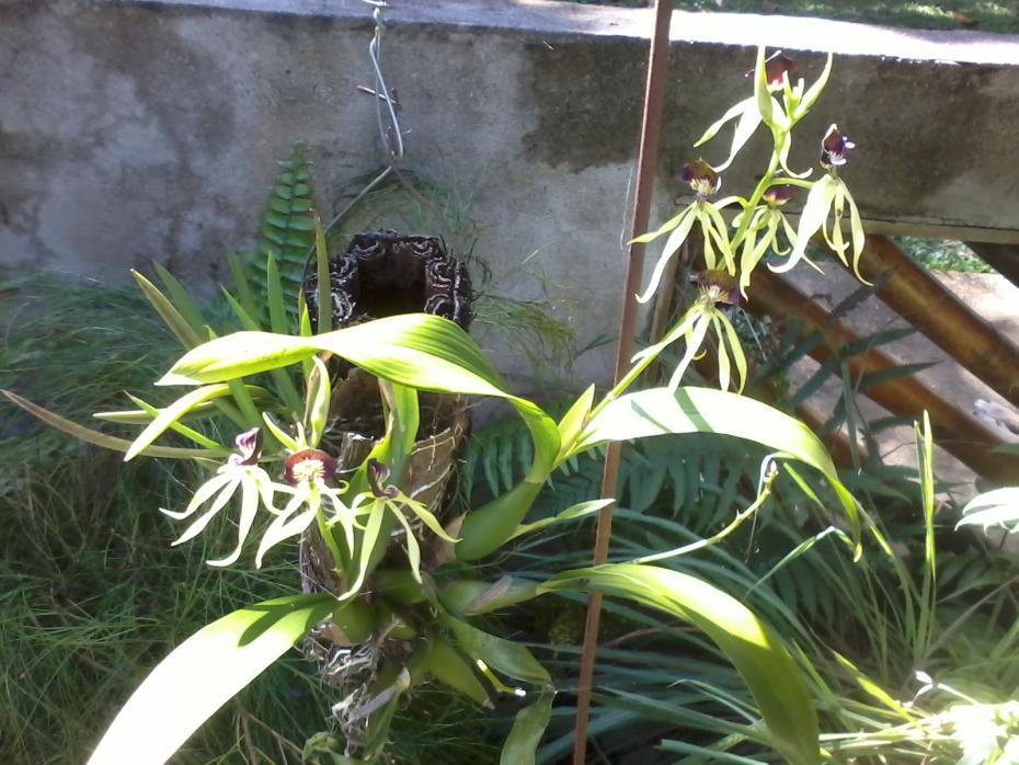 Rio Dulce Morning Coffee Stroll-2014-01-16-12-53-04-jpg