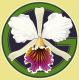 My Green Pets's Avatar