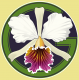 My Green Pets's Avatar
