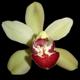 orchidhunter's Avatar