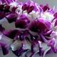 OrchidThief79's Avatar