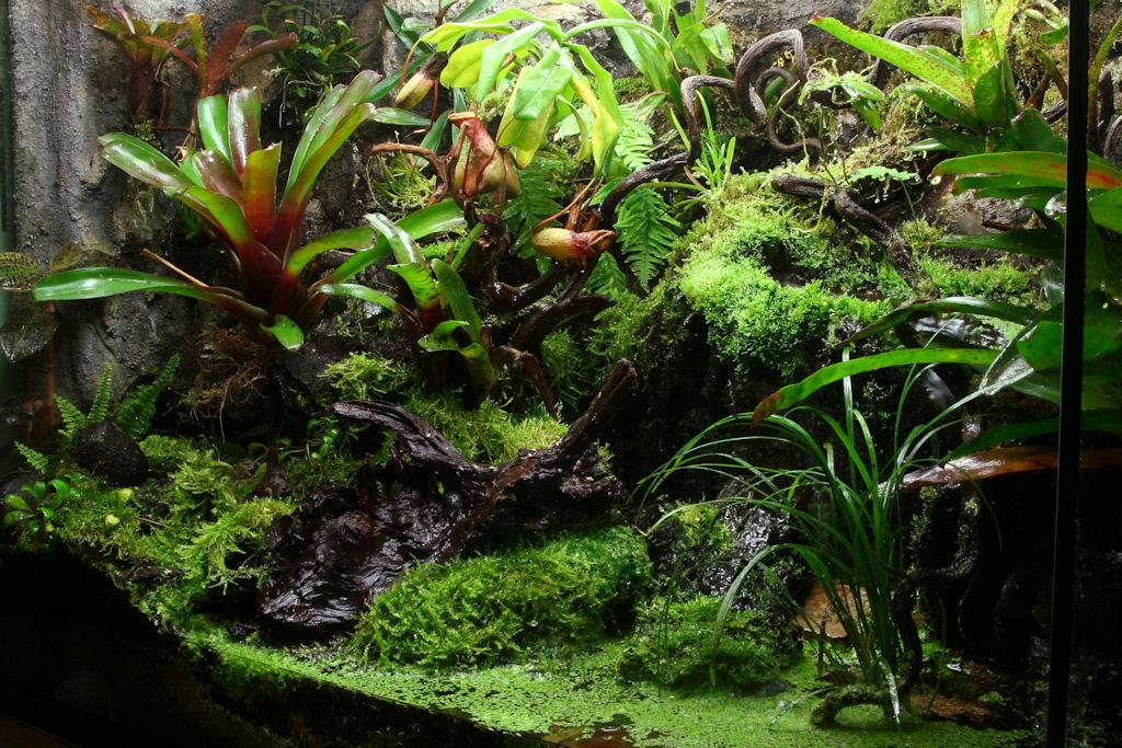 90 Gallon Vivarium - Pic Heavy - Page 3 - Orchid Board ... 10 Gallon Paludarium