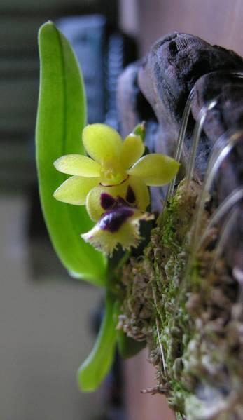 Bloom May 2009