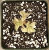 Other plants and aquarium-db57c73e-829d-4342-8d96-a6820f31956e-jpg