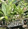 Guanacaste Costa Rica-b559837c-3a59-4952-b26a-da7148658411-jpg